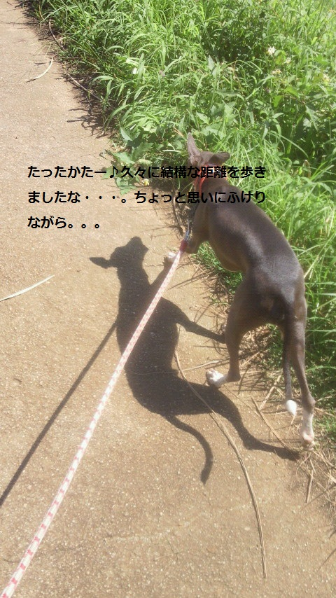 NEC_0031.jpg