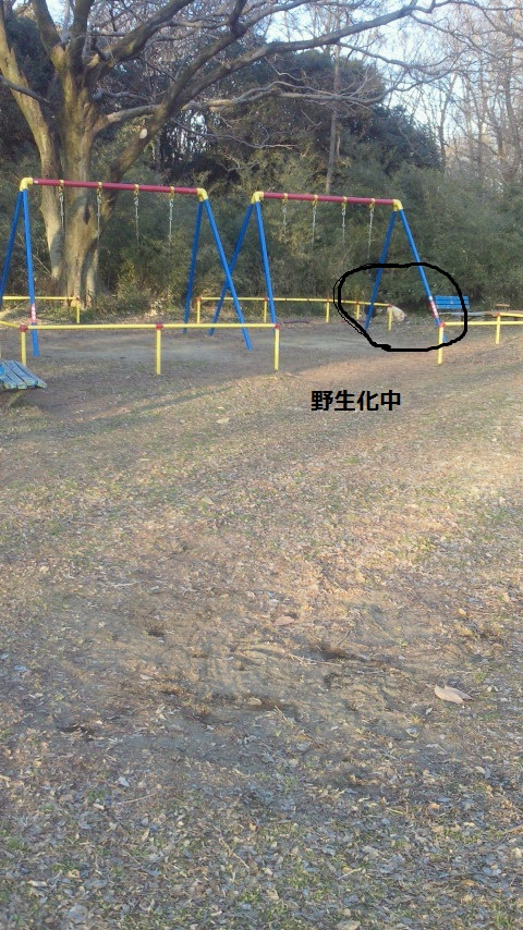 NEC_1125.jpg