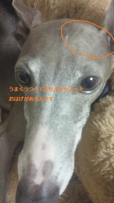 NEC_1209.jpg