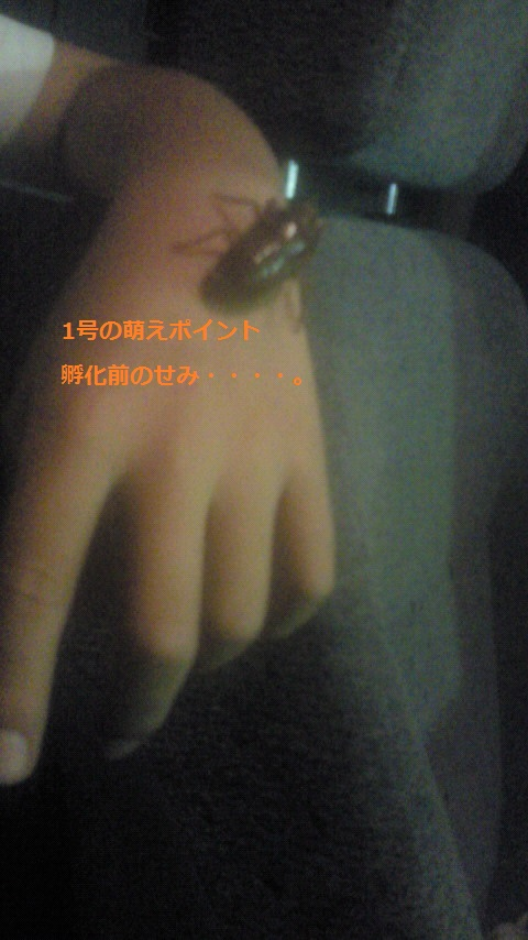 NEC_1652.jpg