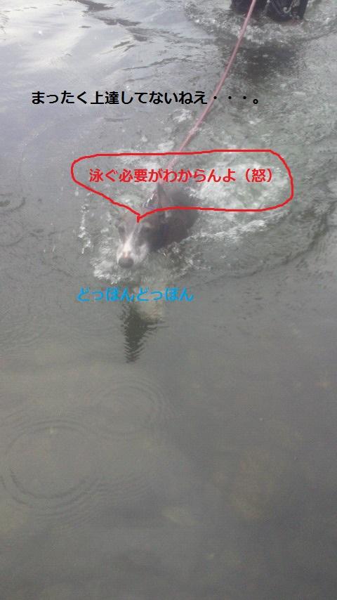 NEC_1658.jpg